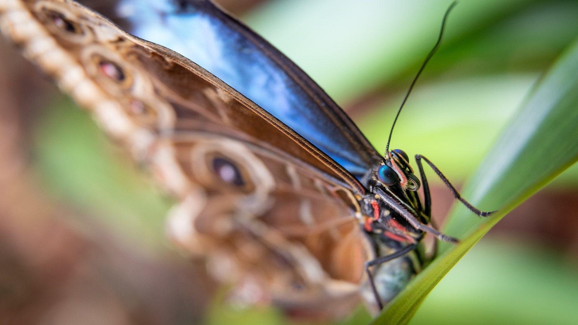 Tropičtí motýli